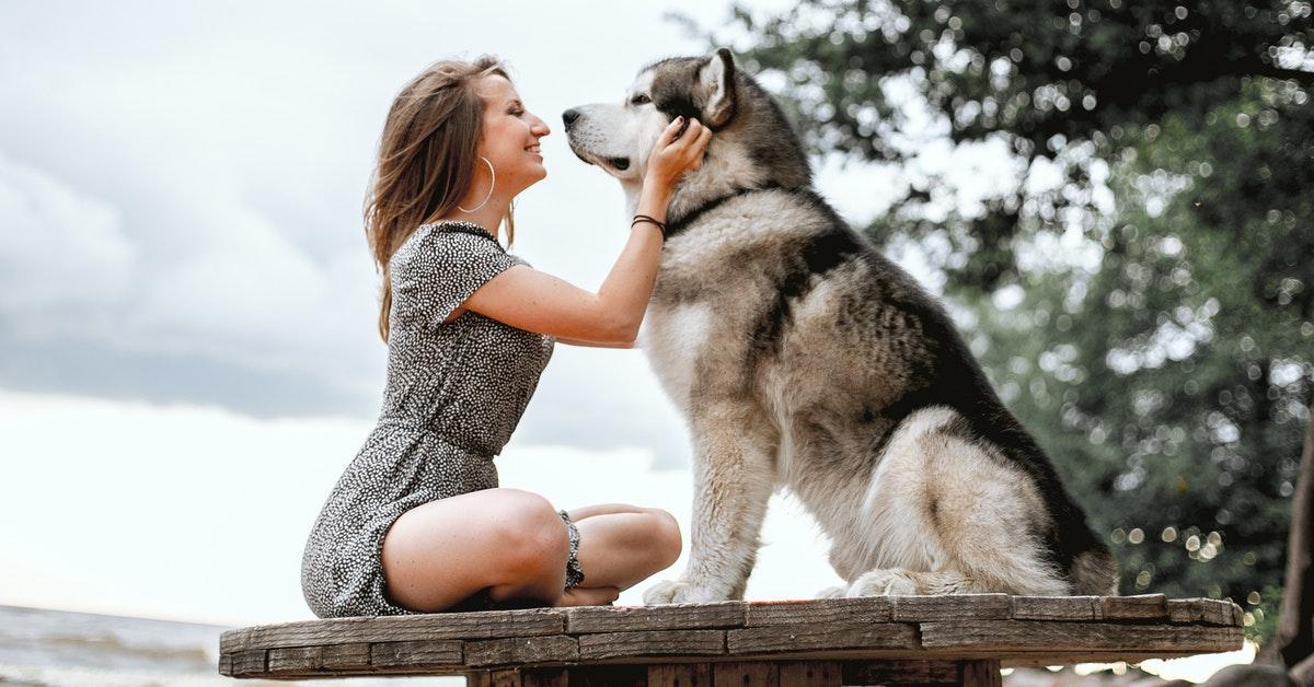 Healthy woman pet dog boost oxytocin